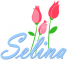Selina Roses