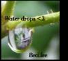 water drops avatar