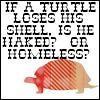 empty turtle